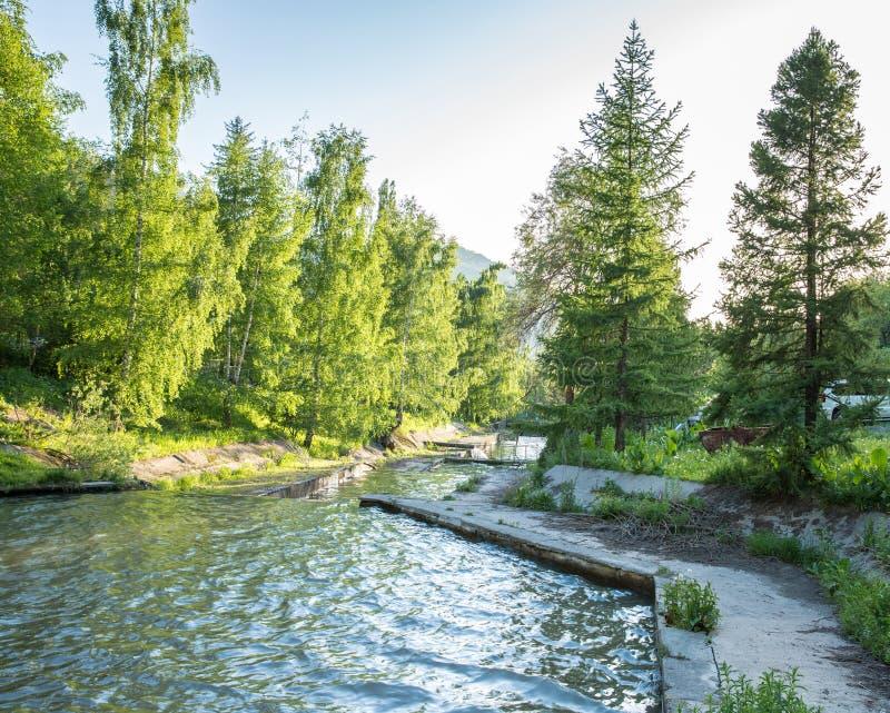 Φύση των πράσινων δέντρων και καταρράκτης του ποταμού κοντά σε Medeo στο Αλμάτι, Καζακστάν στοκ εικόνα με δικαίωμα ελεύθερης χρήσης