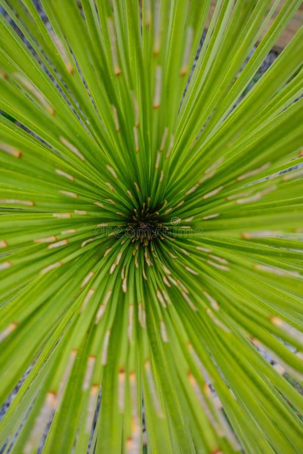 Φύση τόσο όμορφη η τελειότητα που κεντροθετείται της αύξησης στοκ φωτογραφία με δικαίωμα ελεύθερης χρήσης