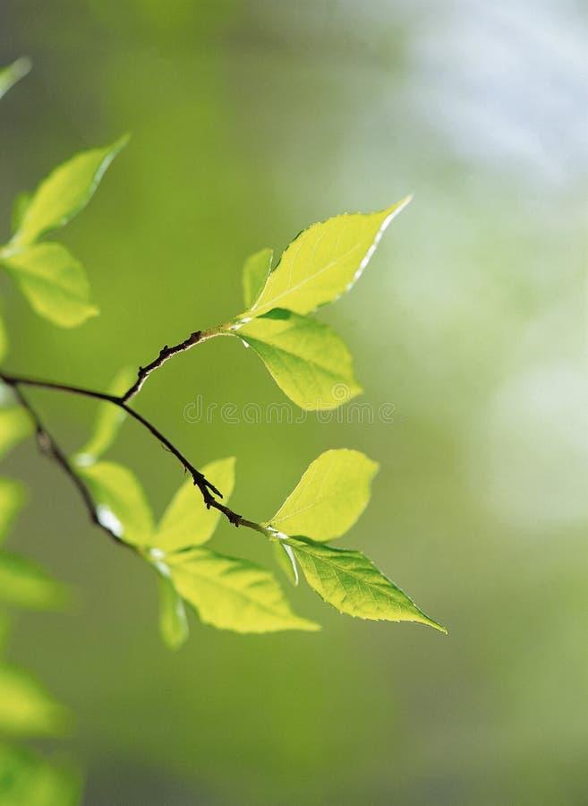 φύση στοκ εικόνες