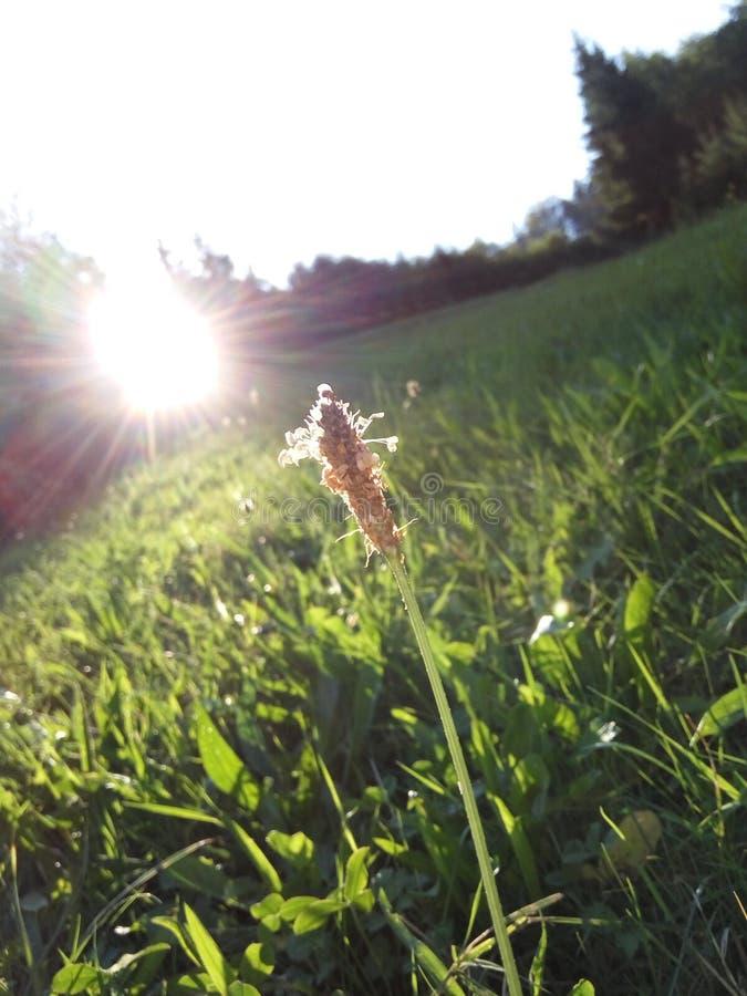 Φύση στοκ φωτογραφίες με δικαίωμα ελεύθερης χρήσης