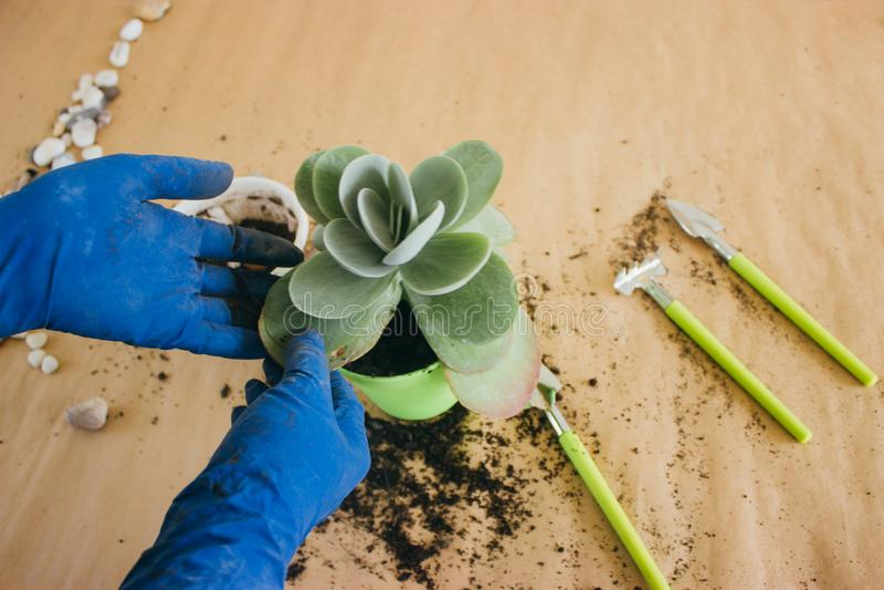 Φύτευση του λουλουδιού σε ένα πράσινο δοχείο στοκ φωτογραφίες