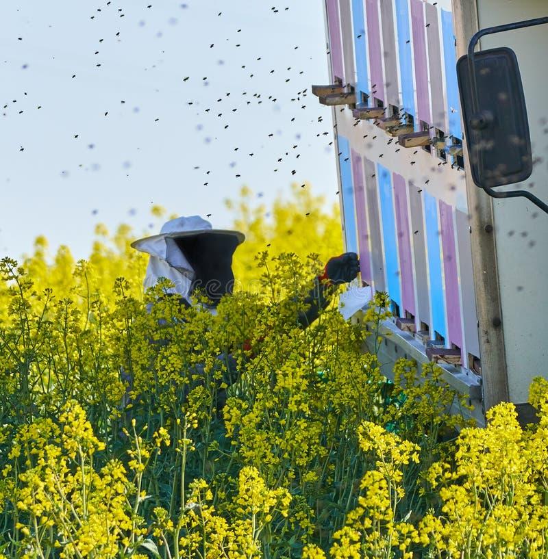 Φύλακας μελισσών που εργάζεται στις κυψέλες στοκ φωτογραφία