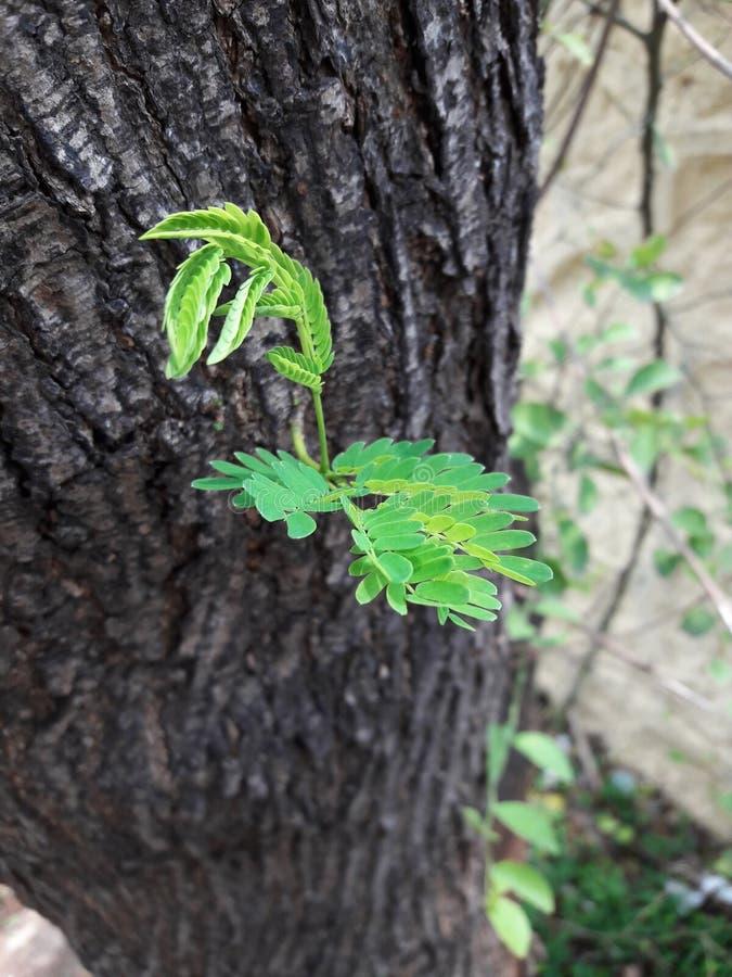 φύλλα δέντρων φυτών στοκ εικόνα