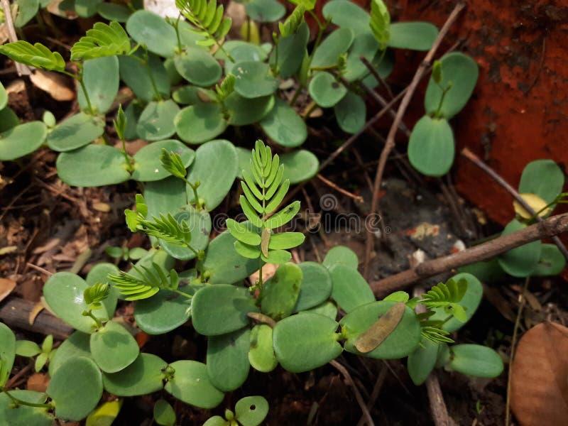 φύλλα δέντρων φυτών στοκ φωτογραφία με δικαίωμα ελεύθερης χρήσης