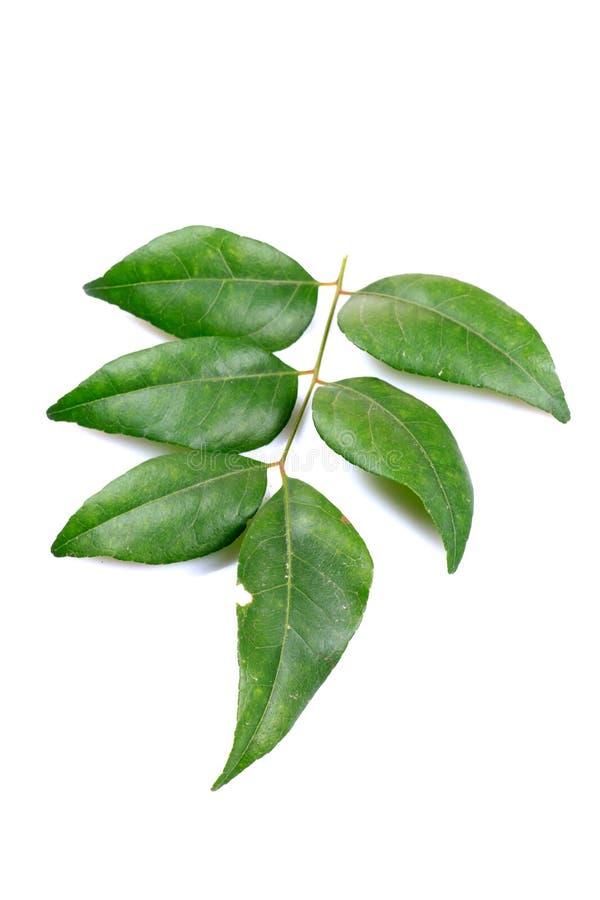 Φύλλα κάρρυ στοκ εικόνα με δικαίωμα ελεύθερης χρήσης