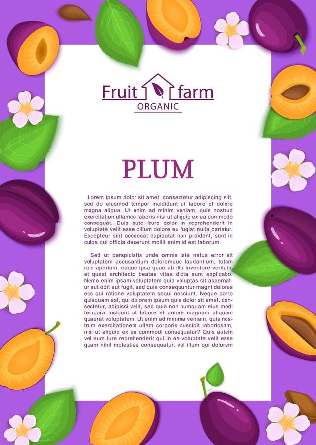 Φύλλα και λουλούδι φρούτων δαμάσκηνων πλαισίων και κινούμενων σχεδίων ορθογωνίων πορφυρά Διανυσματική απεικόνιση καρτών ελεύθερη απεικόνιση δικαιώματος