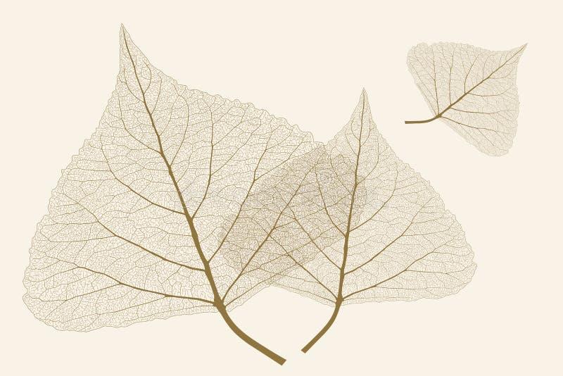 Φύλλα με τα πλευρά στοκ εικόνες με δικαίωμα ελεύθερης χρήσης