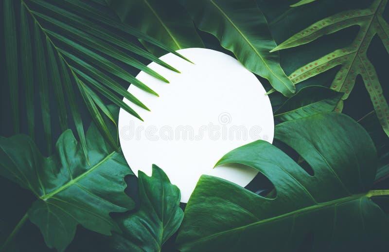 Φύλλα με το διαστημικό υπόβαθρο αντιγράφων Τροπικός βοτανικός στοκ φωτογραφία με δικαίωμα ελεύθερης χρήσης