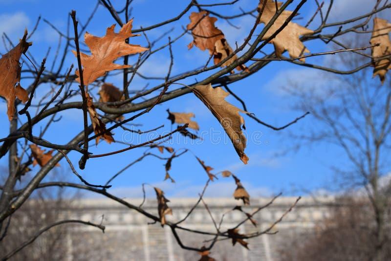 Φύλλα με το φράγμα στοκ εικόνες