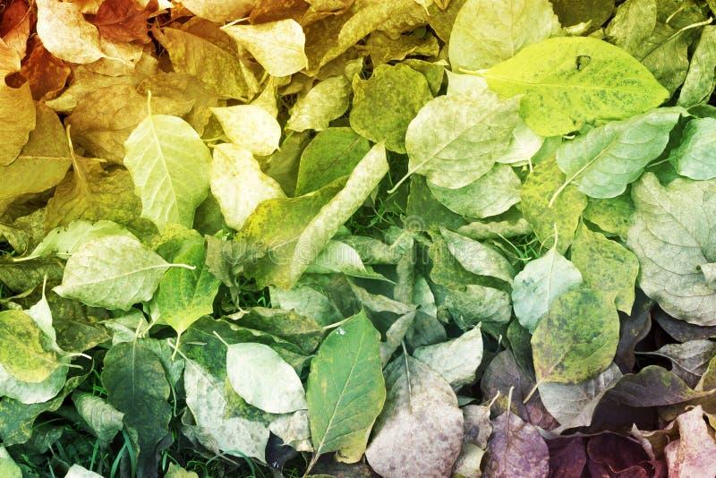 Φύλλα πεσμένος κάτω από το έδαφος στοκ εικόνες