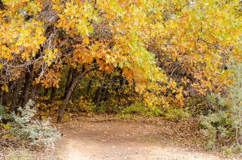 Φύλλα πτώσης πέρα από την πορεία ρύπου στοκ φωτογραφίες