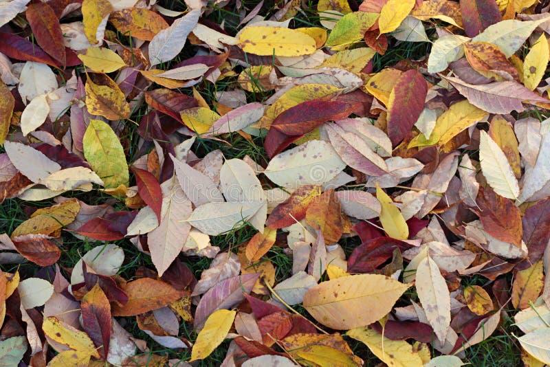 Φύλλα πτώσης στο έδαφος στοκ φωτογραφίες