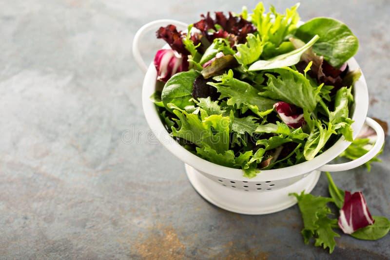 Φύλλα σαλάτας μιγμάτων άνοιξη σε ένα collander στοκ εικόνα με δικαίωμα ελεύθερης χρήσης