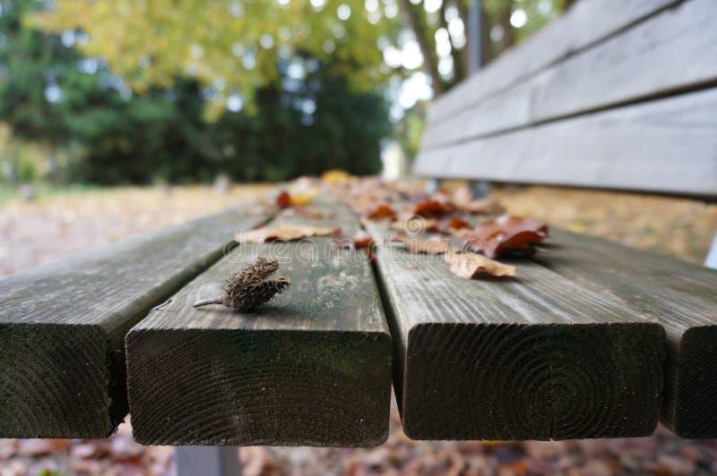 Φύλλα σε έναν πάγκο στοκ εικόνα