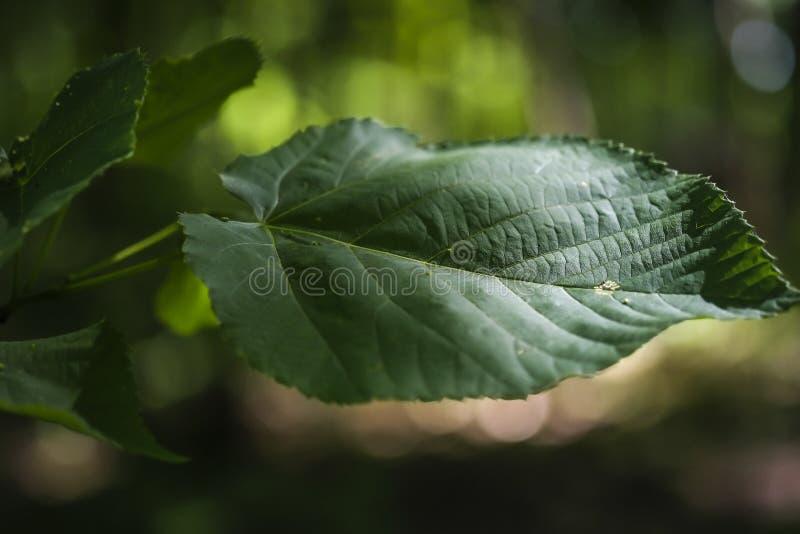 Φύλλα στα βαθιά ξύλα στοκ φωτογραφίες με δικαίωμα ελεύθερης χρήσης