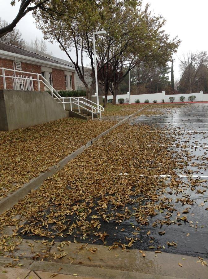 Φύλλα στη βροχή στοκ εικόνες με δικαίωμα ελεύθερης χρήσης