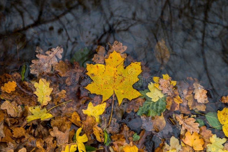 Φύλλα στο νερό στοκ φωτογραφίες με δικαίωμα ελεύθερης χρήσης