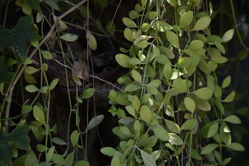 Φύλλα Ταϊλάνδη στοκ φωτογραφία με δικαίωμα ελεύθερης χρήσης