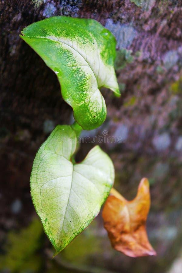 φύλλα τρία στοκ φωτογραφία