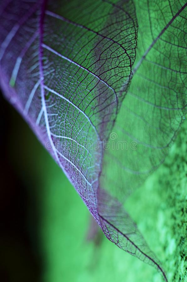 Φύλλα φαντασίας φθινοπώρου στοκ εικόνα με δικαίωμα ελεύθερης χρήσης