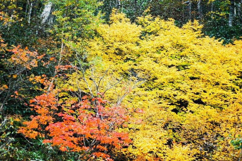 Φύλλα φθινοπώρου σε Shiretoko, Hokkaido, Ιαπωνία στοκ φωτογραφία