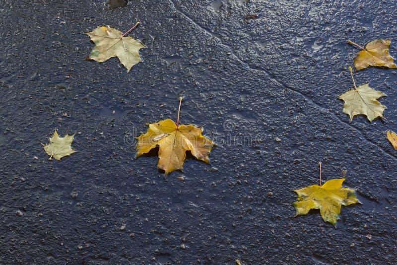 Φύλλα φθινοπώρου στην υγρή άσφαλτο στοκ φωτογραφία