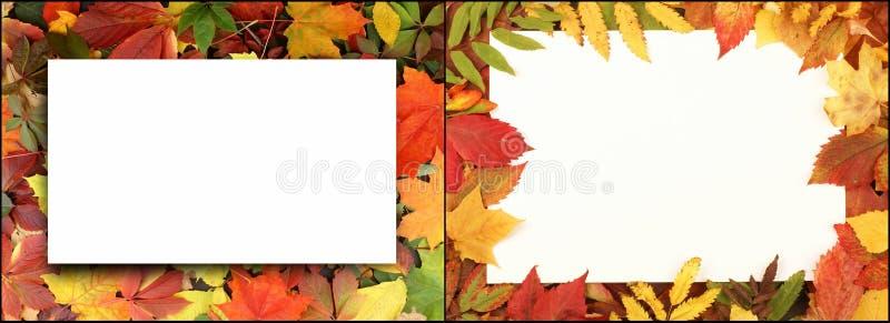 Φύλλα φθινοπώρου στο δάσος ελεύθερη απεικόνιση δικαιώματος