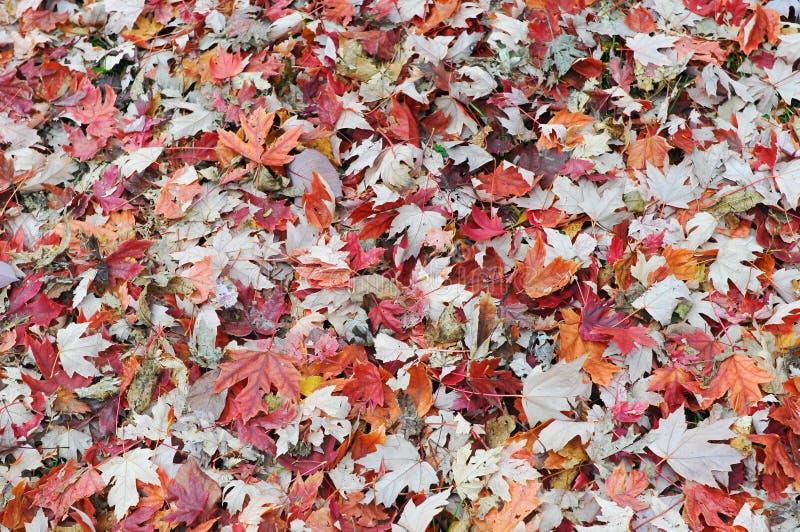 Φύλλα φθινοπώρου στο έδαφος στοκ εικόνα με δικαίωμα ελεύθερης χρήσης