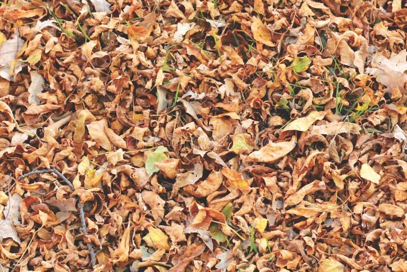 Φύλλα φθινοπώρου στο έδαφος στοκ φωτογραφίες