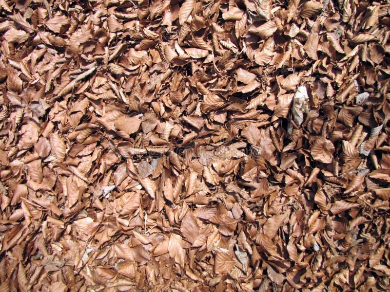 Φύλλα φθινοπώρου στο επίγειο υπόβαθρο στοκ εικόνα