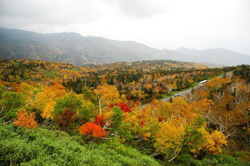 Φύλλα φθινοπώρου στο πέρασμα Shiretoko, Hokkaido, Ιαπωνία στοκ εικόνα με δικαίωμα ελεύθερης χρήσης