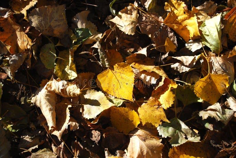 Φύλλα φθινοπώρου των χρωμάτων στοκ φωτογραφίες με δικαίωμα ελεύθερης χρήσης