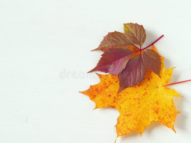 Φύλλα φθινοπώρου BTwo επάνω στο άσπρο ξύλινο υπόβαθρο στοκ εικόνα