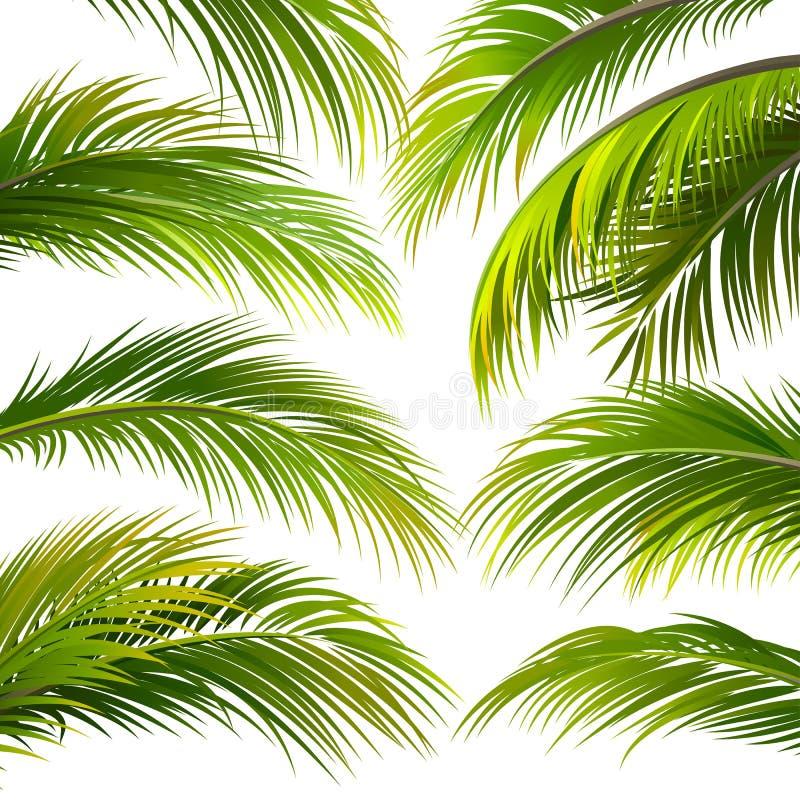 Φύλλα φοινικών διάνυσμα διανυσματική απεικόνιση