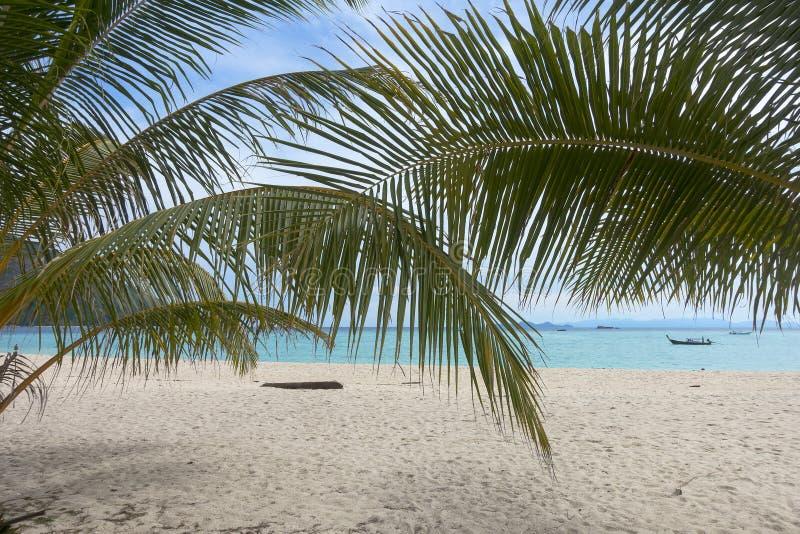 Φύλλα φοινικών και άσπρη παραλία άμμου στοκ φωτογραφίες