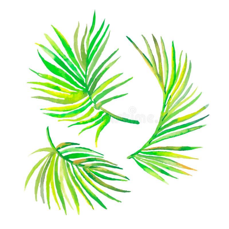 Φύλλα φοινικών Watercolor που απομονώνονται στο λευκό Διάνυσμα για το σχέδιό σας διανυσματική απεικόνιση