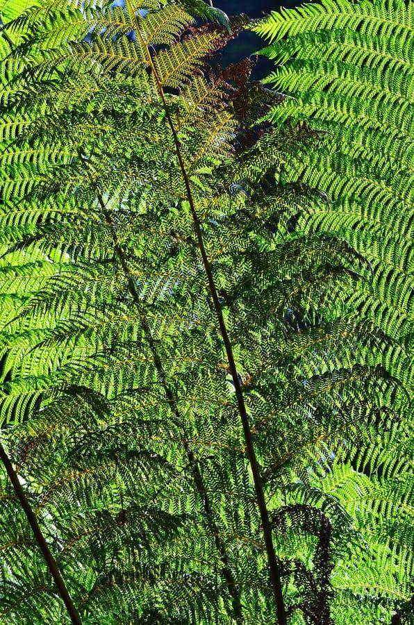 Φύλλα φτερών στον ήλιο backlight στοκ φωτογραφία με δικαίωμα ελεύθερης χρήσης
