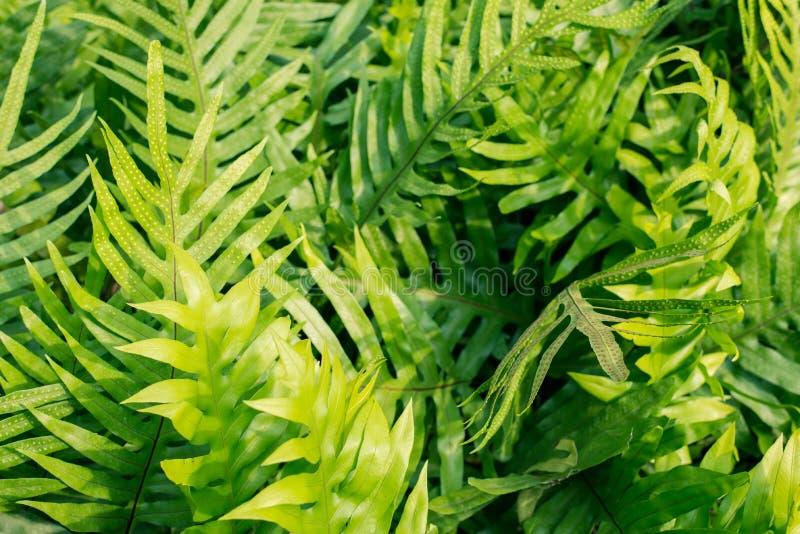 Φύλλα φτερών στον κήπο στοκ φωτογραφίες με δικαίωμα ελεύθερης χρήσης