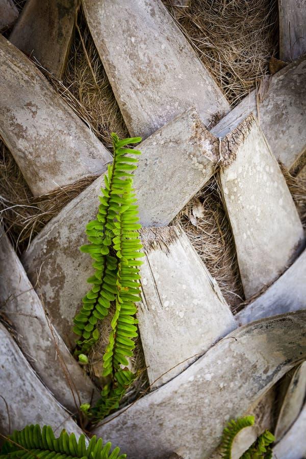 Φύλλα φτερών & φοινικών στοκ φωτογραφία με δικαίωμα ελεύθερης χρήσης