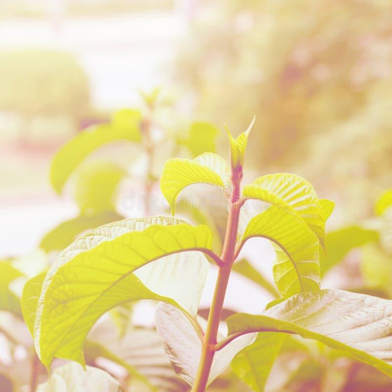 Φύλλα φυτού με το φίλτρο χρώματος στοκ φωτογραφία με δικαίωμα ελεύθερης χρήσης
