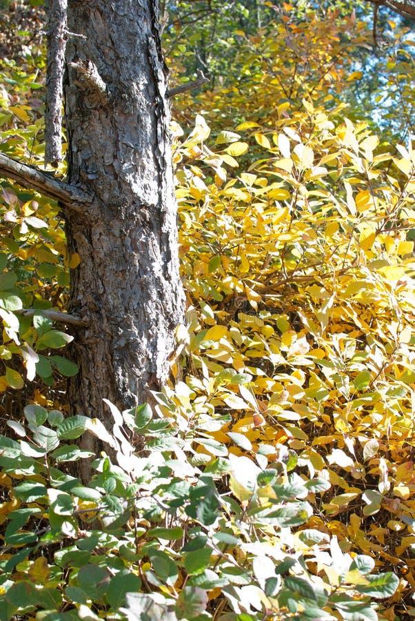 Φύλλα Autmn στοκ εικόνα με δικαίωμα ελεύθερης χρήσης