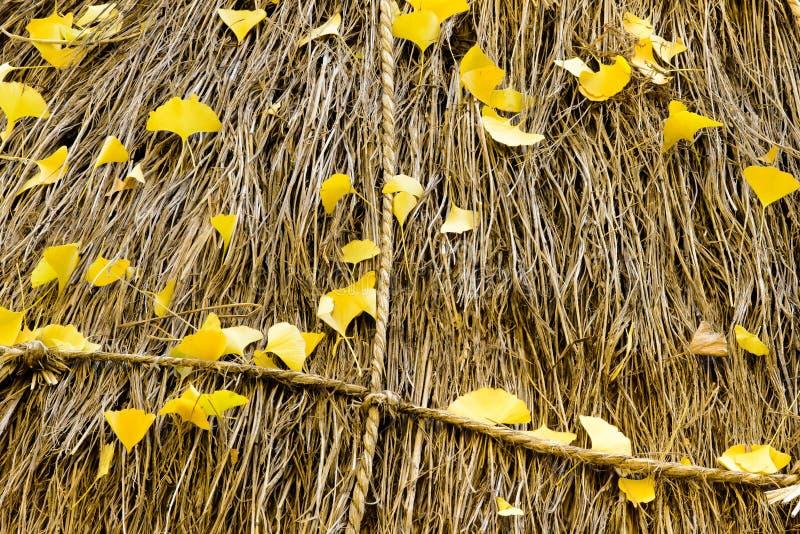 Φύλλα Ginkgo και άχυρο ρυζιού στοκ εικόνες με δικαίωμα ελεύθερης χρήσης