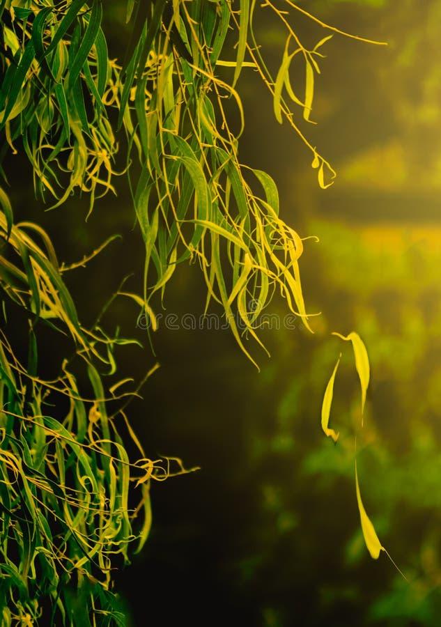 Φύλλα Sunkissed στοκ εικόνα με δικαίωμα ελεύθερης χρήσης