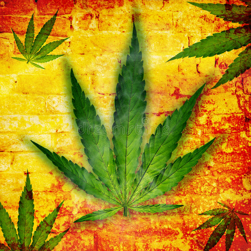 Φύλλο καννάβεων, φυτό μαριχουάνα ελεύθερη απεικόνιση δικαιώματος