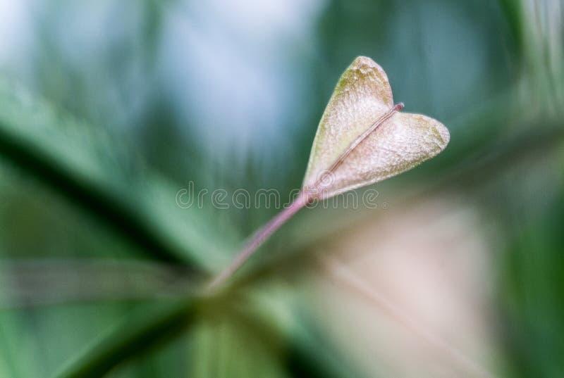 φύλλο καρδιών που διαμο&rho στοκ φωτογραφία