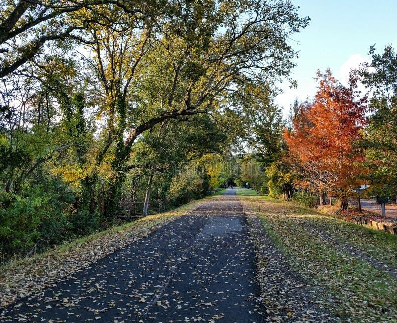Φύλλο-καλυμμένο ίχνος το φθινόπωρο στοκ φωτογραφίες με δικαίωμα ελεύθερης χρήσης
