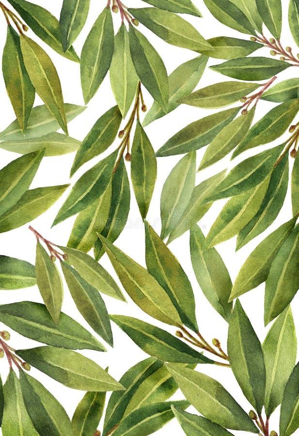 Φύλλο κόλπων Watercolor που απομονώνεται στο άσπρο υπόβαθρο απεικόνιση αποθεμάτων