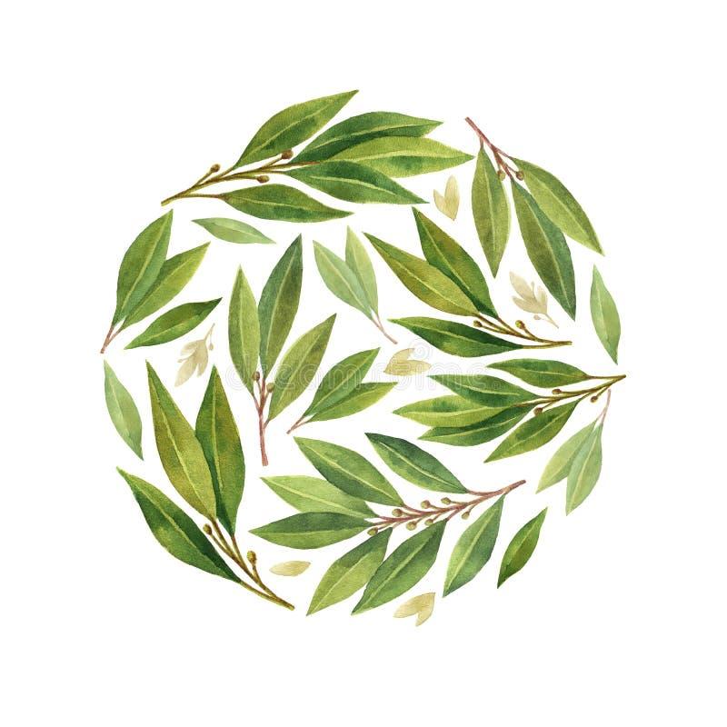 Φύλλο κόλπων Watercolor που απομονώνεται στο άσπρο υπόβαθρο ελεύθερη απεικόνιση δικαιώματος