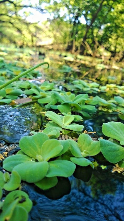 Φύλλο νερού στοκ φωτογραφίες με δικαίωμα ελεύθερης χρήσης