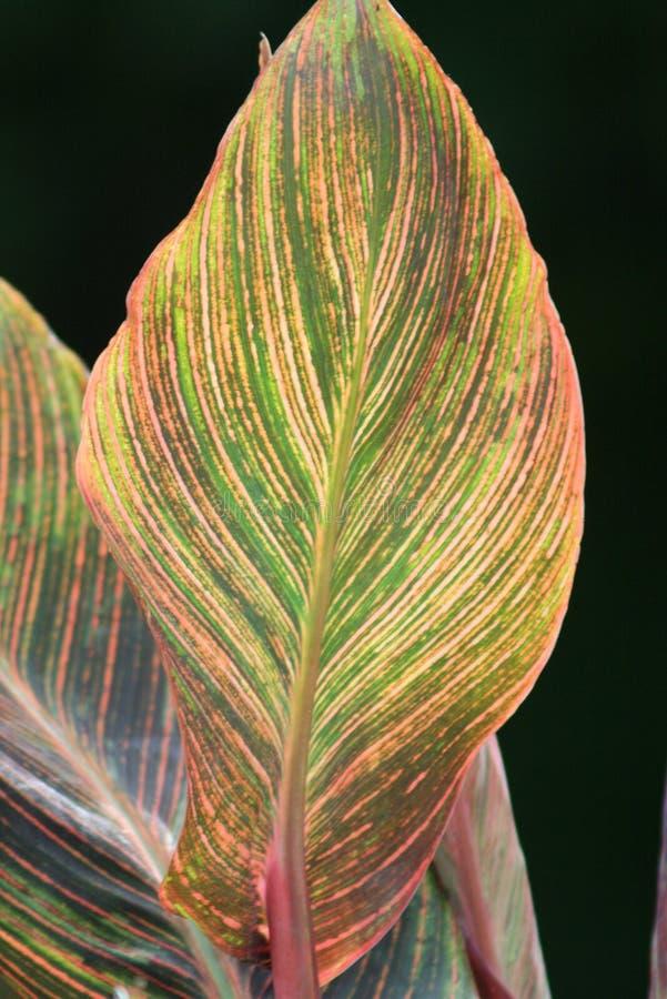 Φύλλο πολλών χρωμάτων στοκ εικόνα με δικαίωμα ελεύθερης χρήσης